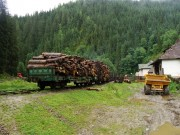 Okrem dlhého dreva sa zváža aj metrovica